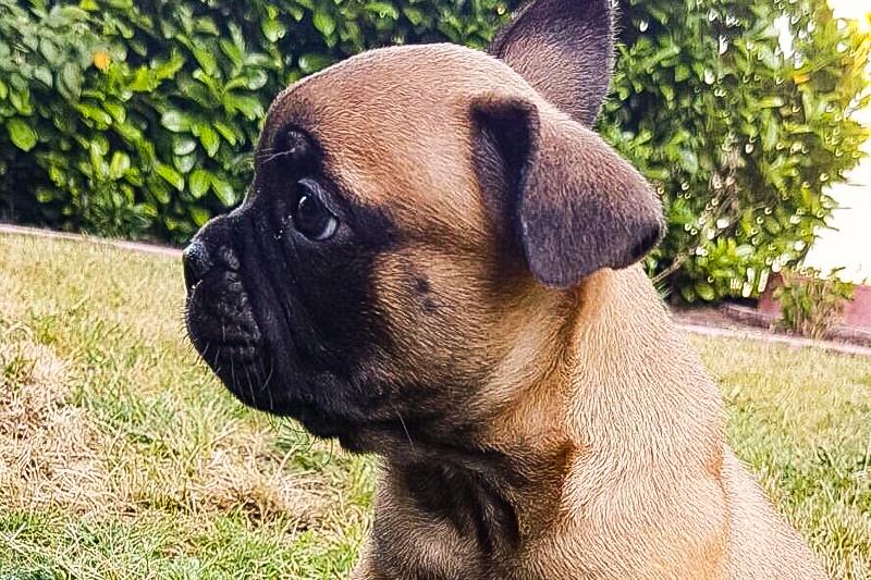 Wir bekommen einen Hund